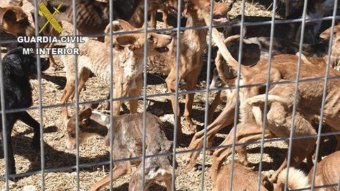 Rescatan de una finca de Toledo a 41 perros desnutridos y en grave estado de abandono