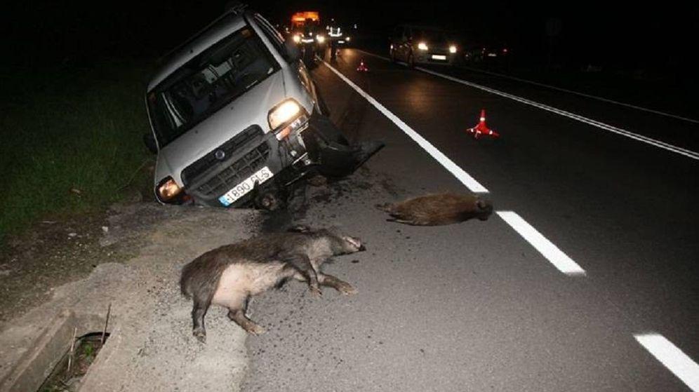Foto: Accidente de tráfico provocado por jabalíes