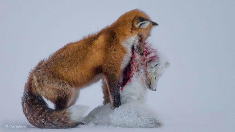 Naturaleza salvaje: las mejores imágenes de animales de 2015