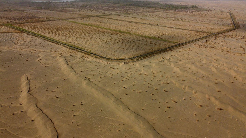 La agricultura le gana terreno al desierto. (Reuters)