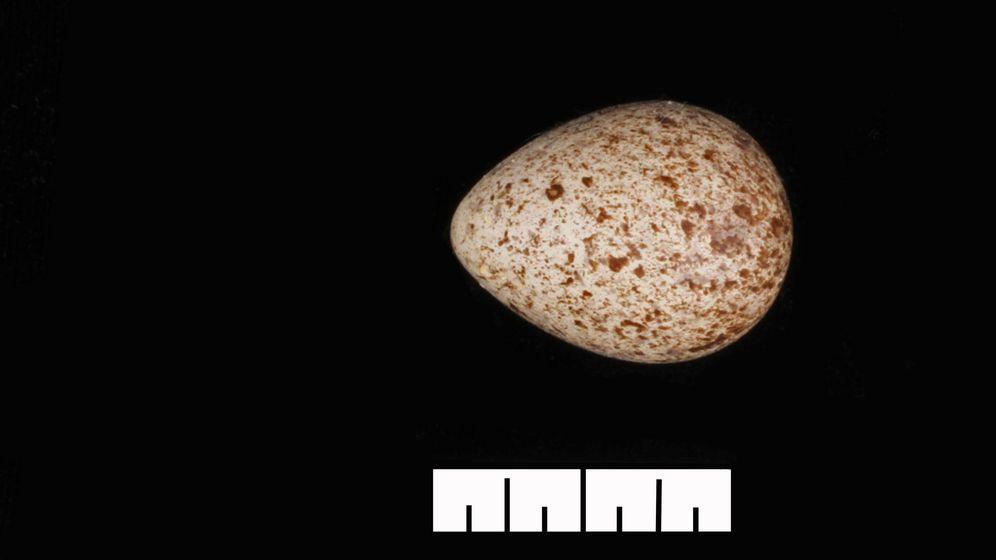 Foto: ¿A qué ave pertenece este huevo?