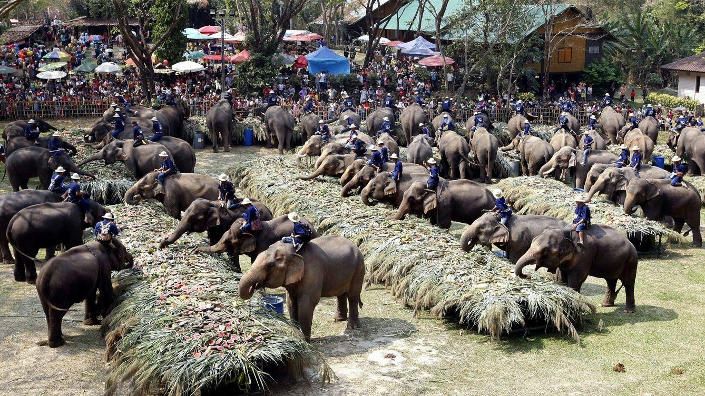 Tus fotografías con los elefantes de Tailandia esconden una historia de abuso y hormonas