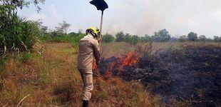 Post de Cómo Bolsonaro priorizó el sector agrario en detrimento de la Amazonía