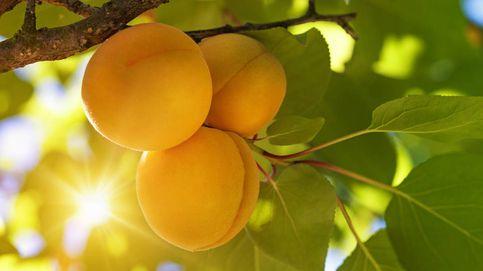 Estas son las frutas y verduras de temporada en septiembre