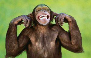 ¿Tienen sentido del humor los animales?