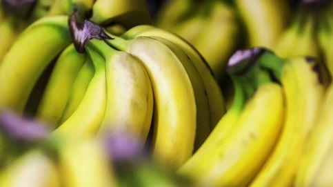 Incautadas cinco toneladas de cocaína escondidas en bananas en Málaga