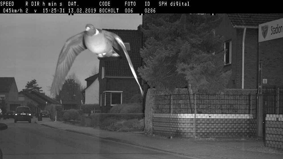 Una paloma se vuelve viral tras ser cazada por un radar de tráfico