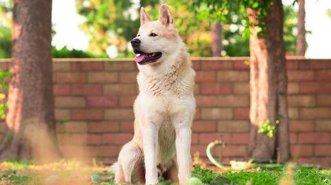 La increíble reacción de una perra cuando la llaman guapa que ya es viral