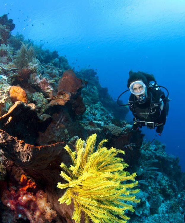 Foto: Hay tanta vida bajo el agua como en la superficie. ¿Quieres descubrirla?