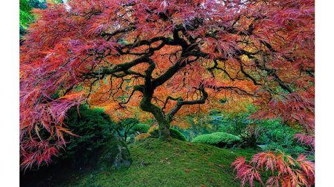 Los árboles bonitos son para el otoño