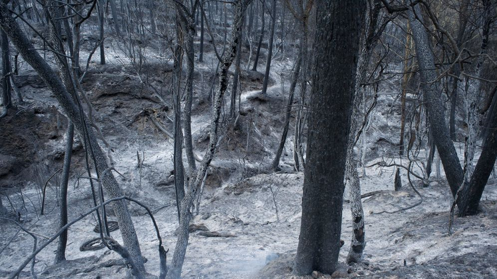 Foto: Bosque calcinado en Vilopriu (A.V)