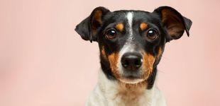 Post de La curiosa reacción de un perro al ver que su dueña se está ahogando