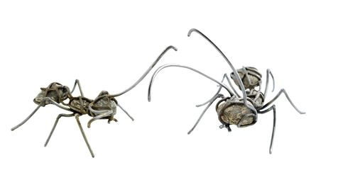 Una hormiga (o varias) que es una obra de arte
