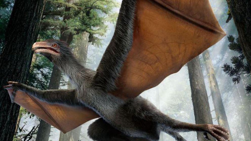 Descubren un pequeño dinosaurio chino con alas de murciélago