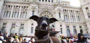 Post de El Congreso aprueba que los animales no sean 'cosas': herencias, custodia y más dudas