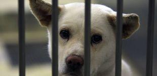 Post de El mensaje que vuelve cada año para recordar los horrores de las perreras