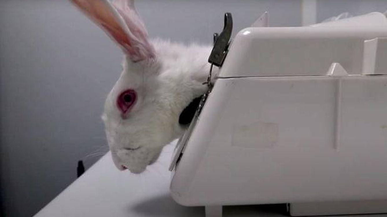 CSIC seguirá trabajando con la firma acusada de tortura animal hasta que termine la investigación