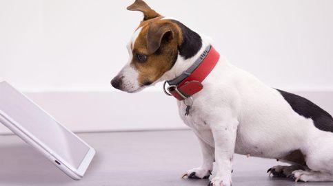 Deja que tu perro elija los números de la primitiva: llegan las apps para mascotas