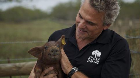 Los primeros cerdos ibéricos criados en Estados Unidos