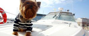 Glamour canino para mascotas fashionistas