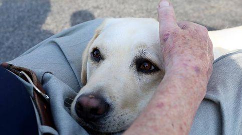 Sully: historia del perro labrador que acompañó a George Bush hasta su muerte