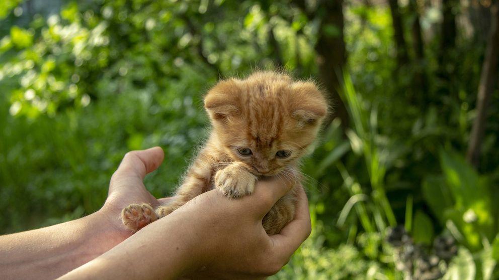 Por qué los gatos tienen la personalidad de sus dueños, según un estudio