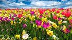 ¿Cuándo empieza la primavera?: 2018 repite y entra en la estación con frío