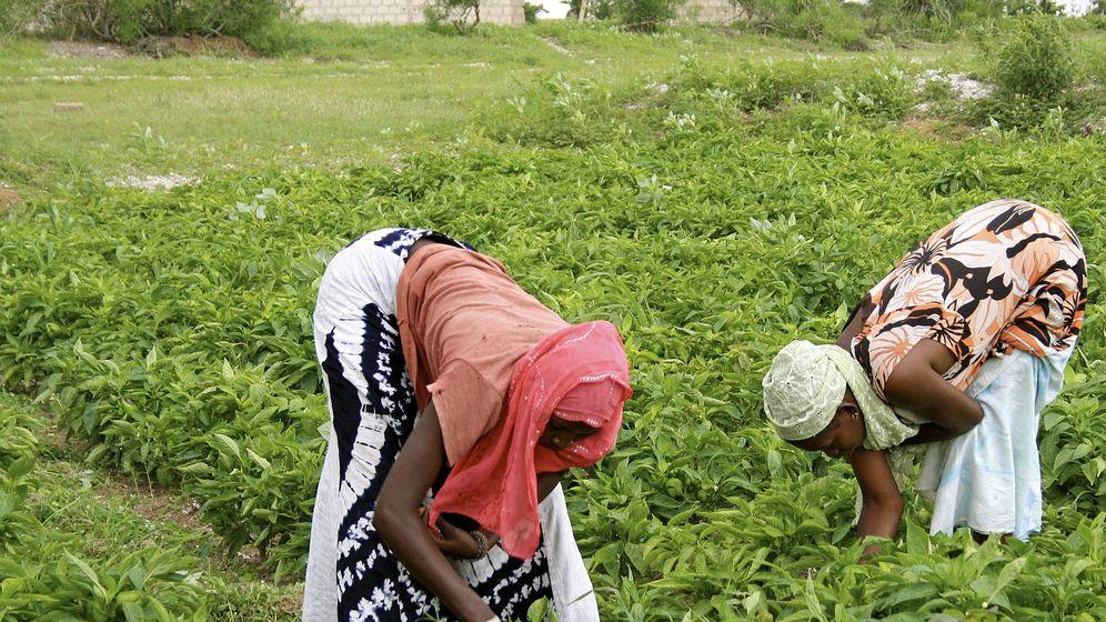 Foto: Dos mujeres trabajan en un campo cercano al Lago Rosa (Senegal). (EFE)