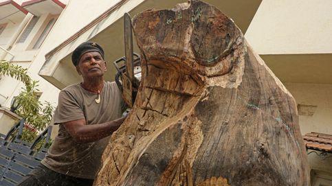 Un perro y un delfín, esculpidos en árbol: así son las monumentales esculturas de un artista indio