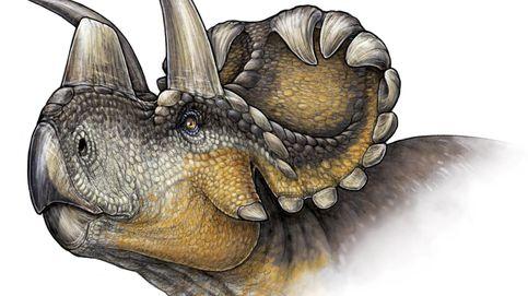 Descubren en EEUU el dinosaurio más antiguo de los ceratópsidos