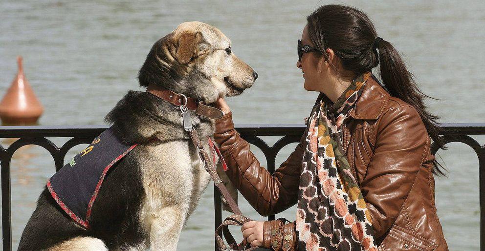 Foto: Una joven cuidadora de un perro abandonado, en el estanque de El Retiro. (EFE)