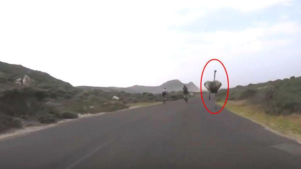Foto: El avestruz, persiguiendo al grupo de ciclistas (YouTube/Oleksei Mishchenko)