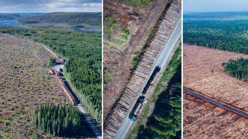 La gran mentira de la industria maderera que explota los bosques del Ártico