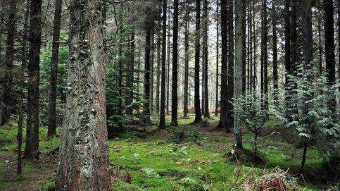 El misterioso anillo prehistórico de 25 metros encontrado en el Bosque de Dean