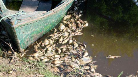 Cientos de peces flotan muertos en Paraguay