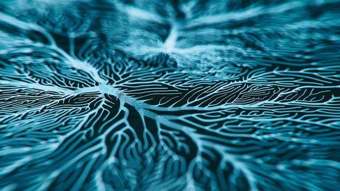 Localizan las neuronas que nos ayudan a adaptarnos a los cambios