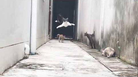 La huida de un gato como si estuviera en una película de acción