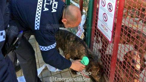 La policía busca al culpable de abandonar 18 cachorros en un parque de Sevilla