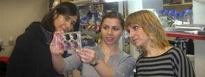 Foto: Científicas españolas consiguen resolver algunas limitaciones de las células madre inducidas