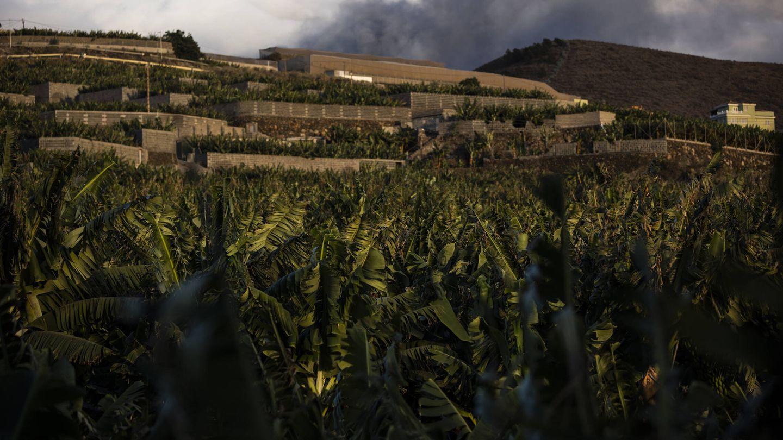 La erupción avanza en La Palma. (Alejandro Martínez Vélez)