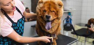 Post de Delaware, primer estado en no matar animales abandonados en refugios