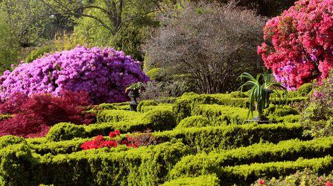 Ponle primavera a tu fin de semana: camelias, vino y cuatro planes más