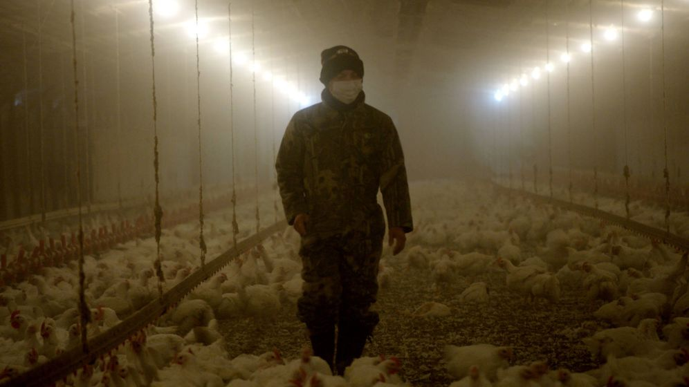 Foto: El director Jayme Karales estrena 'Podredumbre', una serie documental sobre los fraudes de la industria alimentaria. (Netflix)