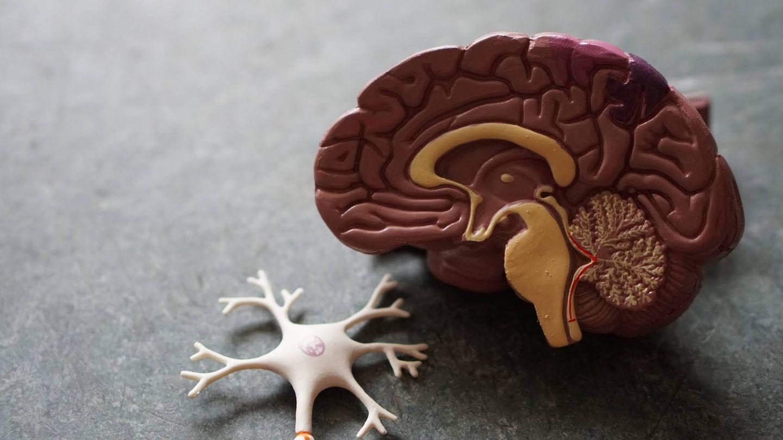 Neurofitness para entrenar el cerebro. (Robina Weermeijer para Unsplash)