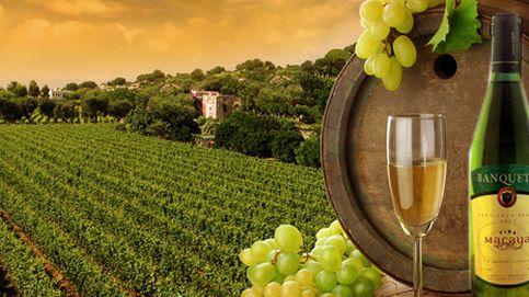 Maridajes vino a vino: Sauvignon Blanc