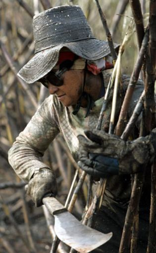 Foto: Esclavos del etanol