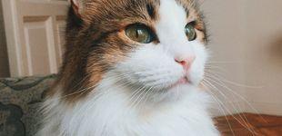 Post de Por qué un gato es el mejor compañero de piso que puedes tener