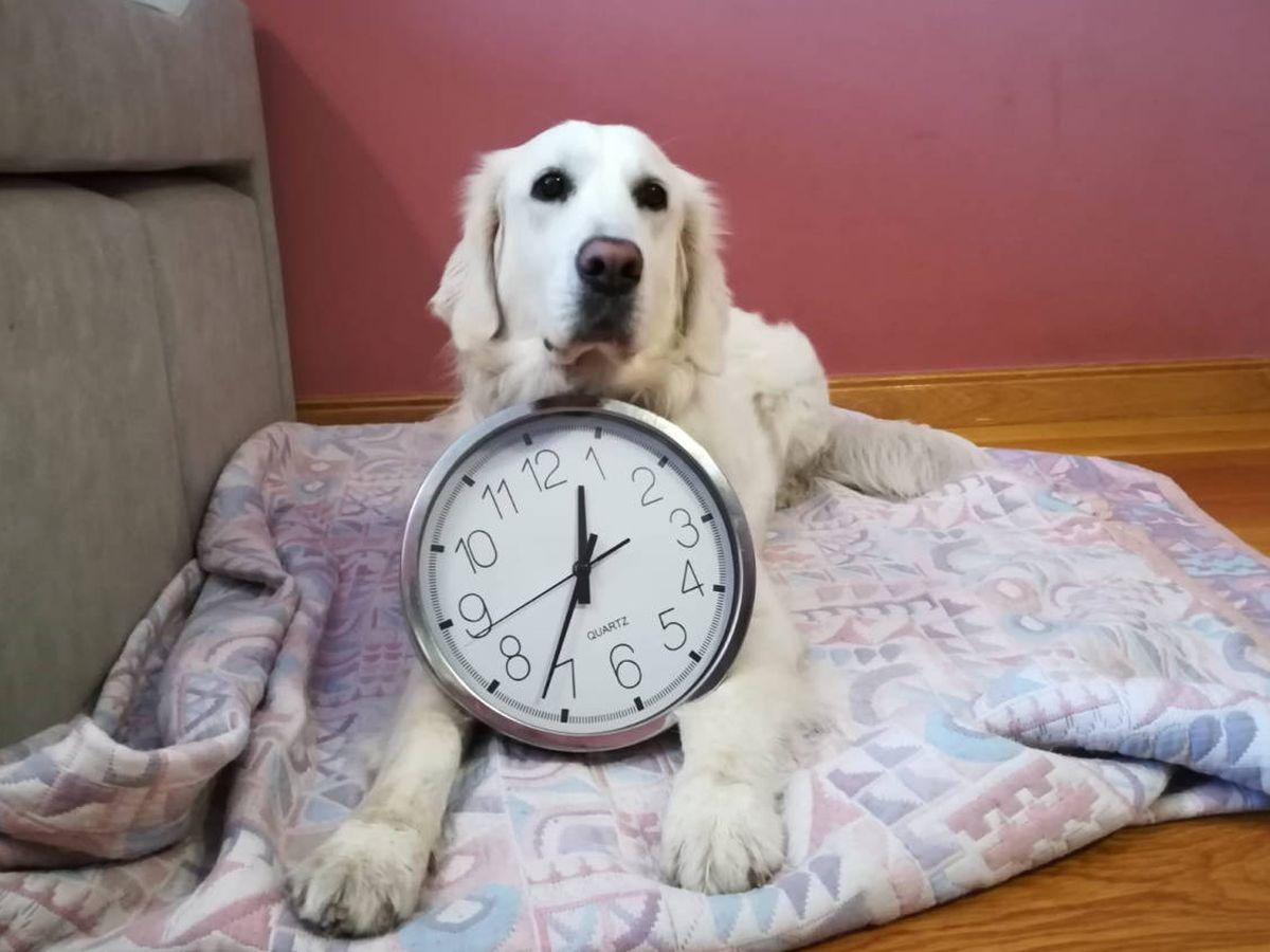 Foto: El tiempo pasa para todos, también para los animales (N.Casao)