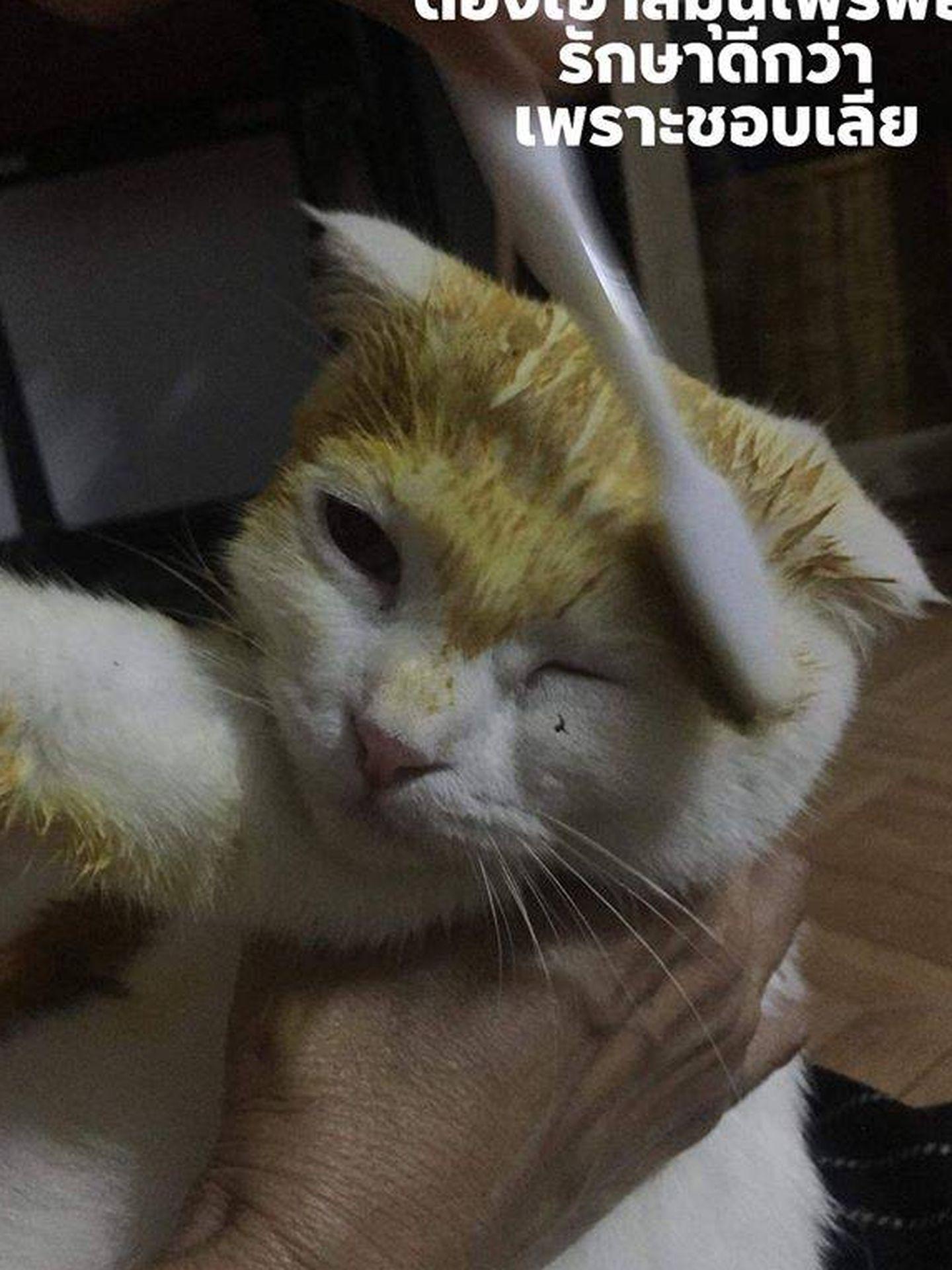 El gato, mientras que recibía la pasta sanadora que le volvió amarillo. Fuente: Reddit