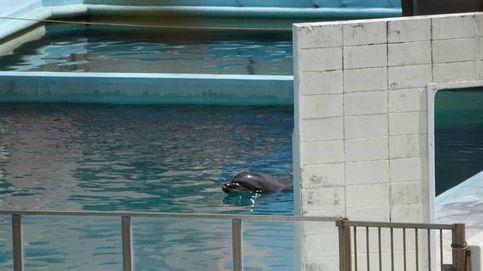 Un delfín muere solo en un acuario abandonado en Japón